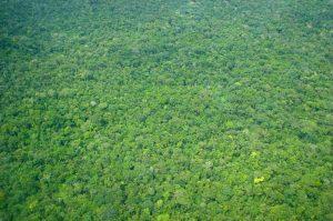 違法伐採の横行により多くの森林が失われ、アマゾン熱帯雨林地帯の荒廃と消失が深刻な問題となってきました~業務用・ウッドデッキ材・ウッドフェンス材の通販なら、アマゾンジャラ専門店/イタウバ専門店 ハードウッドプロ