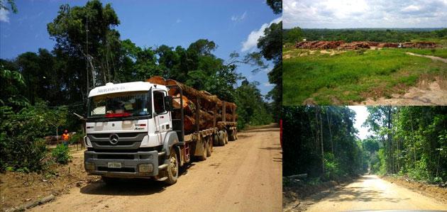 伐採した材木を製材所まで運びます~業務用・ウッドデッキ材・ウッドフェンス材の通販なら、アマゾンジャラ専門店/イタウバ専門店 ハードウッドプロ