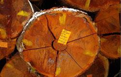 天然木ハードウッドのウッドデッキ&ウッドフェンス、アマゾンジャラとイタウバなら業務用・ウッドデッキ材料・通販ハードウッドプロへ