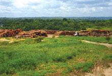 アマゾン森林は、世界で一番厳しく管理された計画に基づいて「伐採」されています~業務用・ウッドデッキ材・ウッドフェンス材の通販なら、アマゾンジャラ専門店/イタウバ専門店 ハードウッドプロ