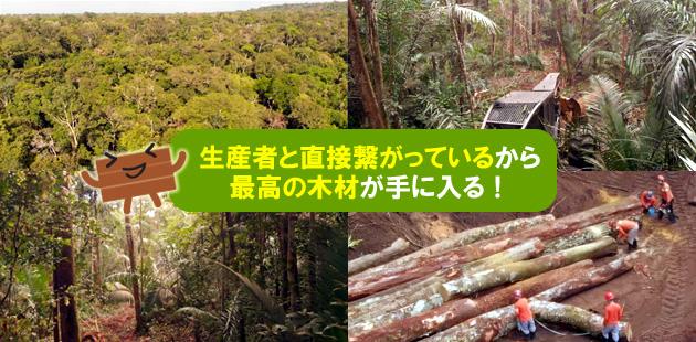 最高の材を求めて、アマゾンの森の中まで出かけて行きます