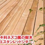 ヒノキ科ネズコ属の樹木「ウエスタンレッドシダー」